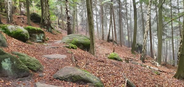 ferienwohnung-elbsandsteingebirge-5